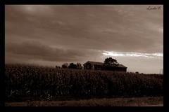 La casa (Linda {*nel mio giorno di dolore che ognuno ha*}) Tags: italy house field sepia farm country mais fabbrico fotografinewitaliangeneration