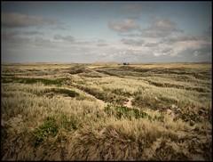 As far as the eye can see (Kirsten M Lentoft) Tags: landscape denmark searchthebest dunes thy jutland klitmøller anawesomeshot theunforgettablepictures overtheexcellence thesuperbmasterpiece kirstenmlentoft