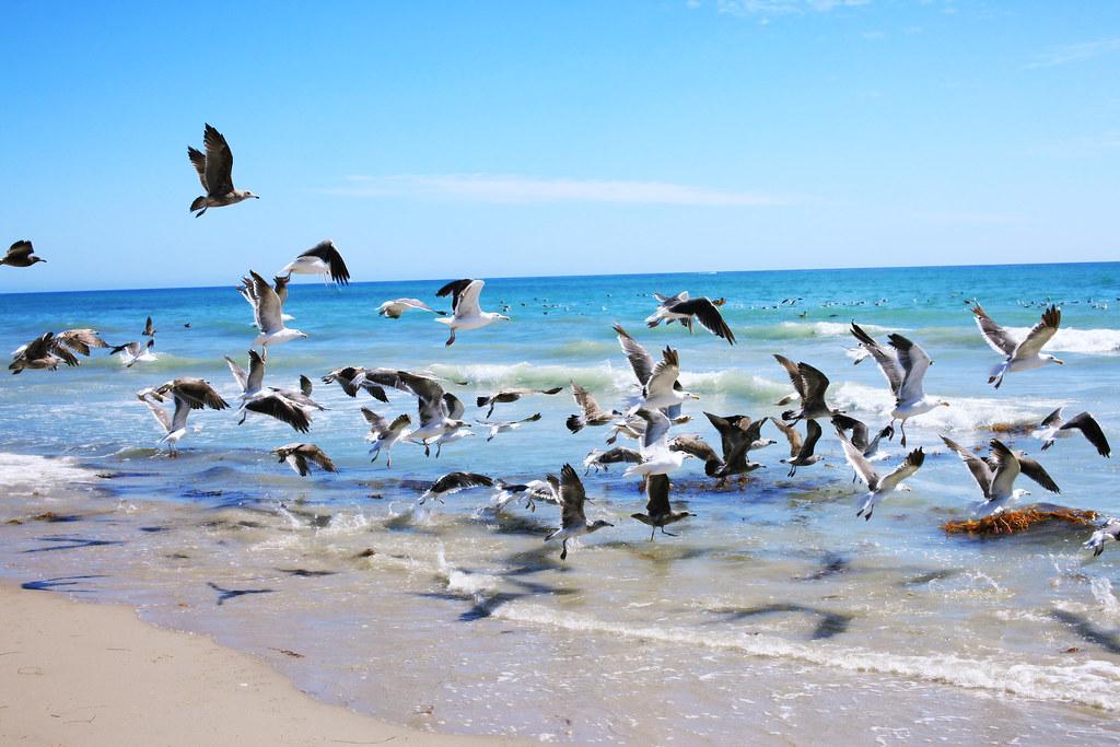 BeachArdo_0054 J