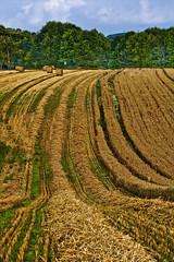 Harvest (justfordream) Tags: field landscape grain cereal harvest feld straw l
