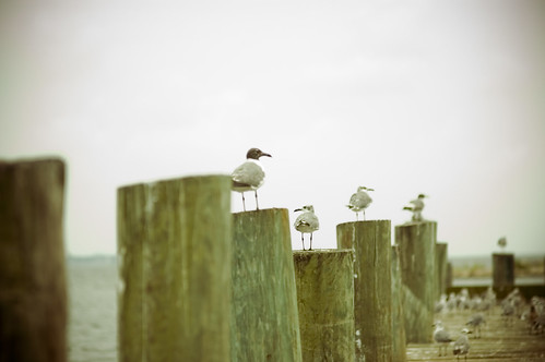 """Seagulls: Mine. Mine. Mine. Mine. Nigel: Oh would you just shut up? You're rats with wings."" by you."