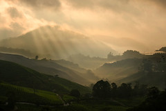Morning sun rays, Cameron Highlands (QooL / بنت شمس الدين) Tags: travel sun mist misty clouds sunrise dark dawn tea hill valley plantation layers rays cameronhighlands tones qool sgpalas qoolens fingersofrays