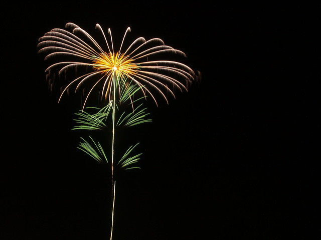 Flower on the dark sky