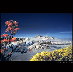 morning bromo #1 (yoga - photowork) Tags: mountain tree fog canon indonesia landscape ir photography 350d angle ngc wide infrared 1022mm