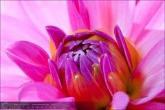 Flores-20090809-125114