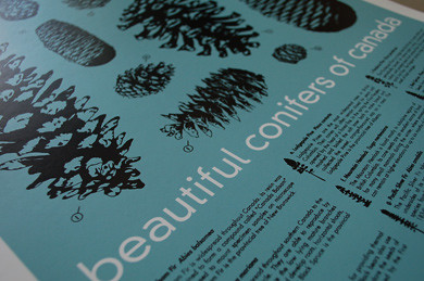 beautiful conifers of canada by you.