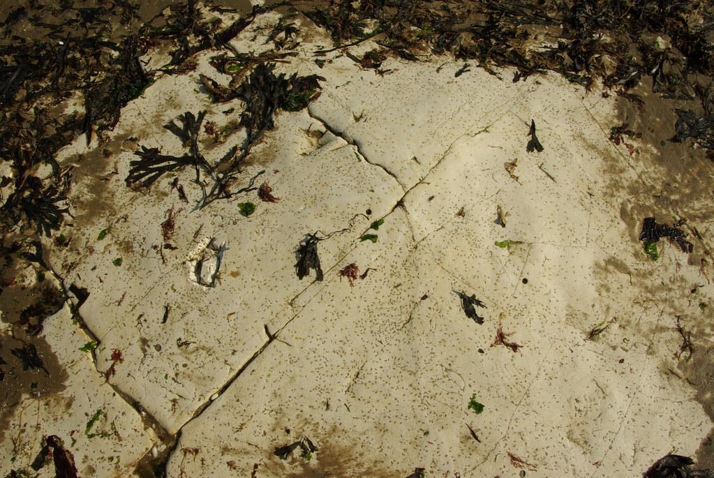 Chalk pavement - Foreness Bay