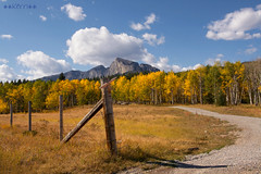 Autumn in the Rockies (Explored) (Kerri's Photos (I'm Back!!)) Tags: road autumn trees canada mountains fall colors clouds kerri landscape alberta banff rockymountains canmore yellowleaves canonxti updatecollection
