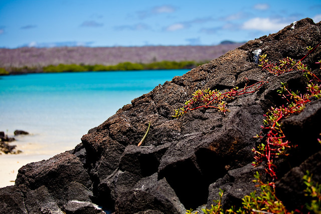 Galapagos Islands-91
