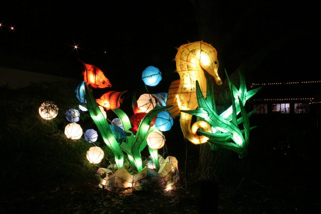 Faune et flore aquatique - Lanternes chinoises - Jardin de Chine
