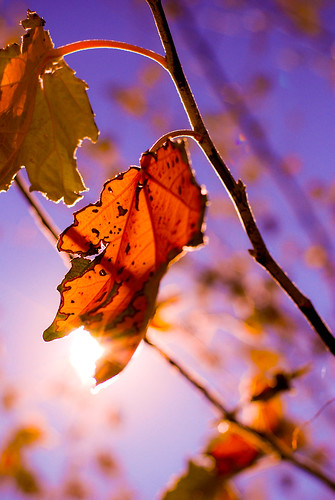 Sun. Leaf. Autumn.