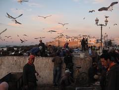 Essaouira fishermen (Morocco)