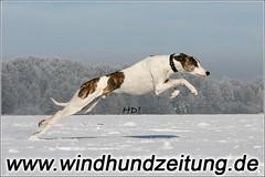 Sprinter-in-Steinhagen