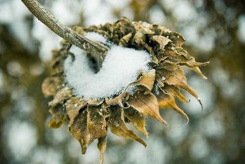 Winter_0008