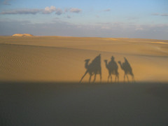 In the desert (Nitekite) Tags: africa travel light shadow vacation holiday nature canon desert egypt camel fabulous gypten wonderfulworld colorphotoaward impressedbeauty worldwidetravelogue nitekite