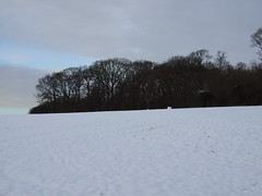 sharphill wood in the snow