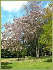 Prati fioriti verticalmente (Starlightworld) Tags: alberi fiori starlightworld goldmedalddd