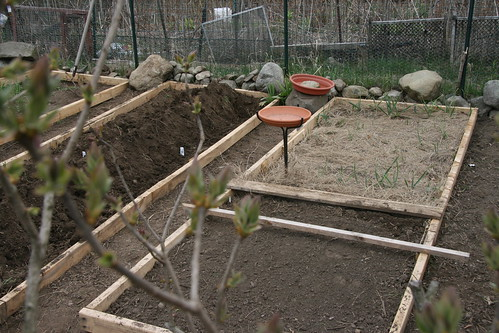 planted beds