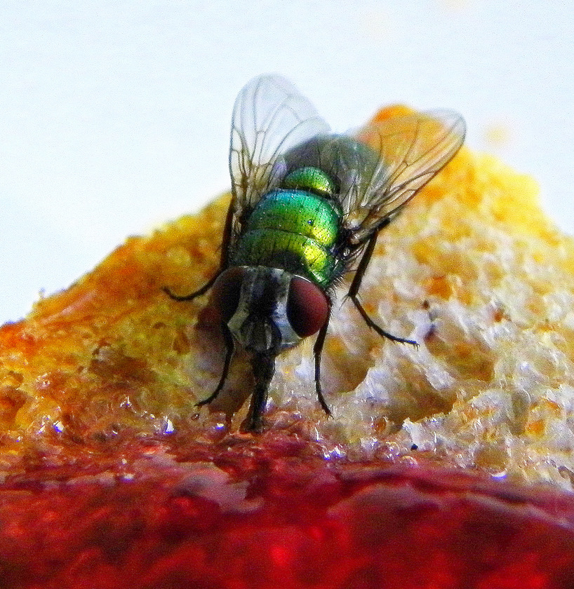Fly On Toast