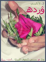 ~.. الا ياليتني وردة وتلمسني كفوف الزين (MARWA ~) Tags: وردة الزين الا كفوف ياليتني وتلمسني