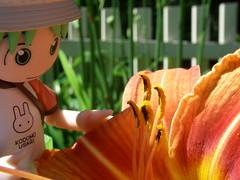 Yotsuba With A Tiger Lilly (Yoshi Gizmo) Tags: girl japan toy figure collectable yotsuba revoltech summervacationset