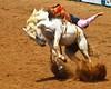 Bareback Bronc (Marvin Bredel) Tags: horse oklahoma bareback cowboy action rodeo shawnee rider marvin bronc flyingdirt marvin908 internationalyouthfinalsrodeo rebelt1i iyfr canoneosrebelt1i bredel marvinbredel