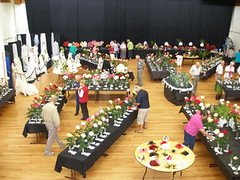 2008 National Spring Rose Show, Whangarei