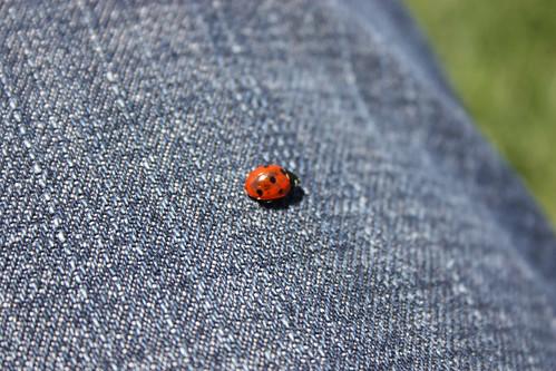 Ladybug on jeans