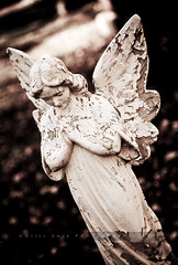 Divinity (Miles Away Photography - Mandi Miles) Tags: old monument beautiful cemetery grave graveyard statue sepia angel vintage woodland wonderful spectacular dead photography death photo amazing war peace photographer respect image antique gorgeous headstone mary jesus picture pic photograph fallen stunning soldiers restingplace rest bayview aged dedicated plot relegion milesaway mandimiles milesawayphotography
