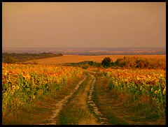 Bogacsi Sunflowers (JoannaRB2009) Tags: friends sunset mountains nature hungary village path natura hills valley sunflowers