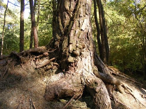 tree man 2009. Tree Man