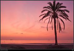 sola en la playa (soybuscador) Tags: sea espaa sunrise mar spain sand lila arena amanecer ibiza shore palmtree rbol lone palmera 2009 solitario orilla playadenbossa soybuscadorgmailcom