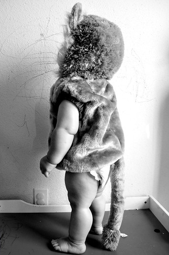 baby lion [2]
