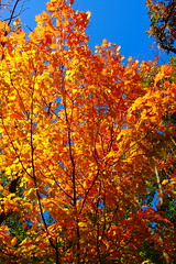 A Brilliant Palette! (p.csizmadia) Tags: red orange green fall nature yellow october foliage trail northern brilliant fiery brilliance csizmadia autuman loraincountymetroparks blackriverreservation pcsizmadia highmeadowstrail highmeadowsextension
