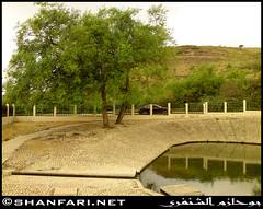 Ain Humran, Dhofar (Shanfari.net) Tags: flowers plants nature al natural ericsson sony greenery cave oman salalah  sultanate dhofar  khareef  haq      taqah    governate  madeinat   darbat taiq c905 maghsail  raythut