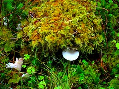 mushroom trying to hide (ruby.magnay) Tags: skye water mushrooms moss photographer class diamond hobbits isle finest natures naturesfinest abigfave flickrdiamond