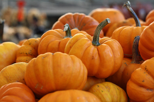 baby pumpkins by ginnerobot, on Flickr