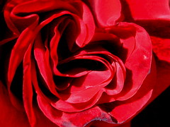 Rose Heart (euphotica) Tags: red flower macro rose petals heart interior burma top20red
