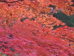 Leaves (jnoc) Tags: massachusetts montague paperroute montaguereporter
