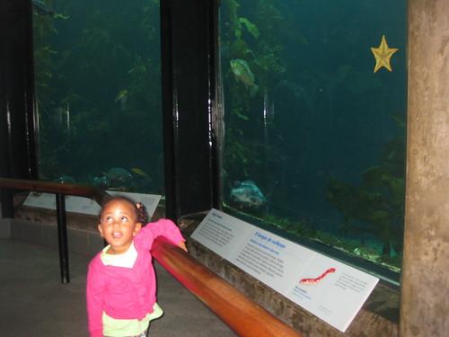 10-24-09 - Monterey Bay Aquarium