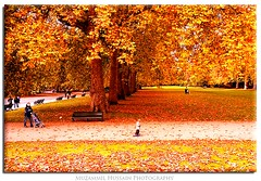 London Autumn (Muzammil (Moz)) Tags: uk autumn london beautiful hydepark moz