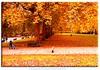 London Autumn (Muzammil (Moz)) Tags: uk autumn london beautiful hydepark moz