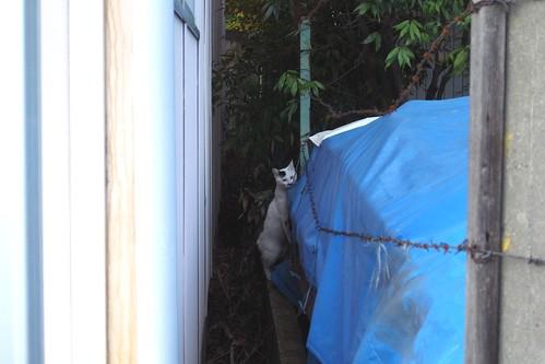 Today's Cat@2010-04-29