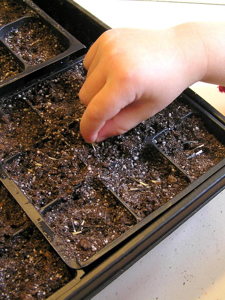 gia plants zinnias (3/10)