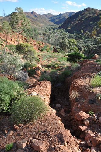 Hodgkinsons - a major scar in the spectacular Yudnamutana Gorge: erosion gullies in this supposedly 'rehabilitated' mining industry exploration target in Arkaroola - click to see more