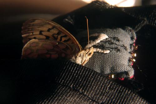 Sleepytime dead moth