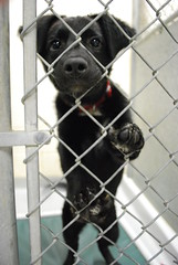 Grover at the Edmonton Humane Society ~ ADOPTED! (Vegan Butterfly) Tags: dog black cute woof animal puppy nose eyes edmonton play adorable ears canine cage furcoat bark grover paws collar companion kennel claws ehs pads adoptions edmontonhumanesociety