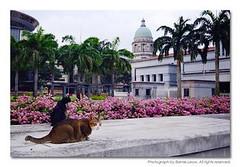 362792 (Barnie Leow) Tags: cats cat singapore feline azure kitty meow strays barnie photonx