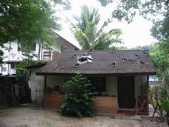 Maleisië, neushoornvogels