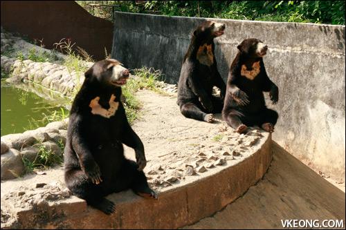 melaka trip sun-bears